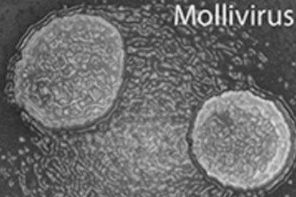Trovato tra ghiacci della Siberia un virus gigante di 30 mila anni fa