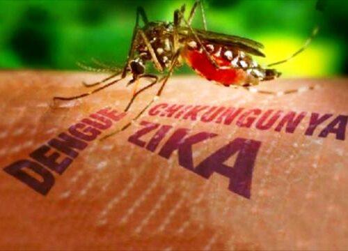 Virus Zika e modificazioni genetiche