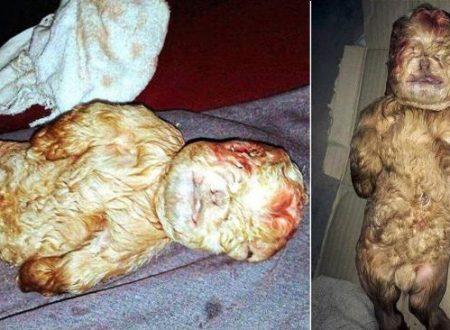 Trovato in Malesia un capretto con volto umano, un uomo capra?