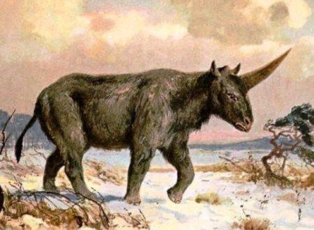 Ritrovato fossile di unicorno risalente a 29000 anni fa