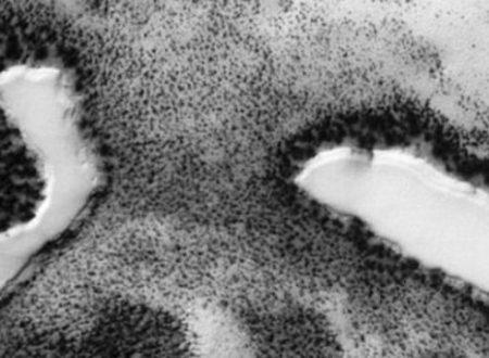 Laghi e vegetazione sulla superficie di Marte?