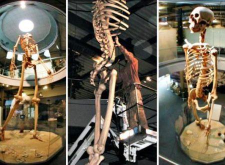 La storia nascosta: scheletri giganti di 7 metri di altezza