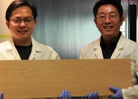 Inventato il super-legno resistente come l'acciaio