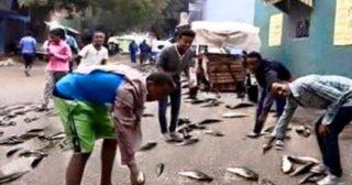 Pioggia di pesce in Ethiopia