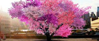 Albero 40 frutti in fioritura
