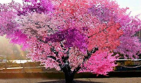 Incredibile albero che produce 40 diversi tipi di frutta