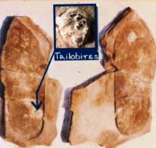 Orma e trilobite
