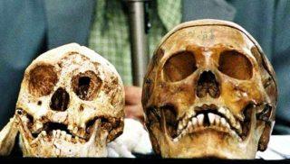 Homo Floresiensis e Homo Sapiens