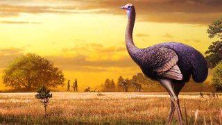 Uccello gigante