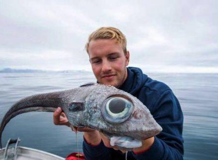Pescato un rarissimo pesce di 300 milioni di anni fa
