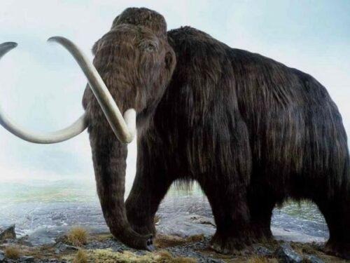 Popolo paleolitico ammorbidiva avorio di mammut